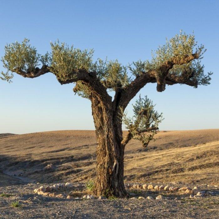 Agafay Wüste_1