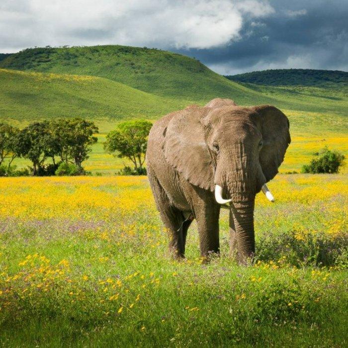 TZA.Karatu.Elefant