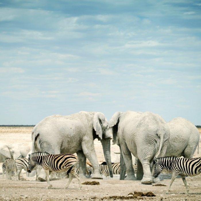 NAM.Etosha Nationalpark.Elefanten
