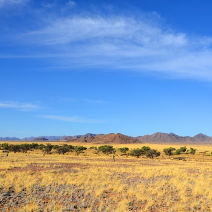 NAM.Namib Naukluft.Steppe