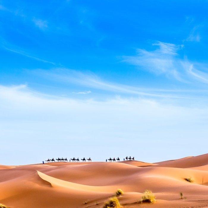 MAR.Merzouga.Kamele in Dünen