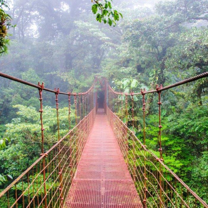 CR.Monteverde.Junglebridge