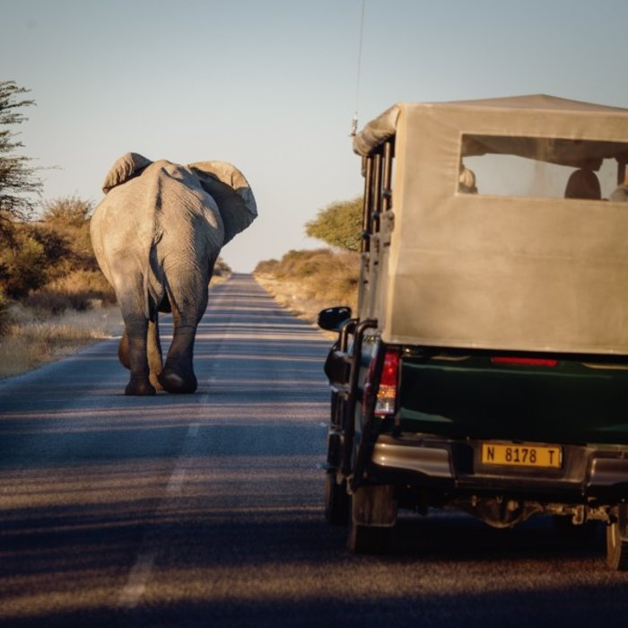 NAM.Etosha Nationalpark.Jeep