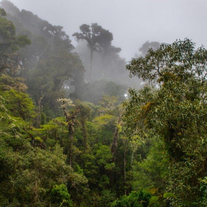 CRI.Los Quetzales NP.Nebel
