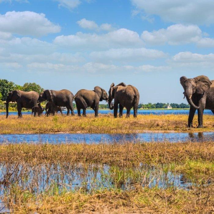 BWA.Chobe NP.Elephants