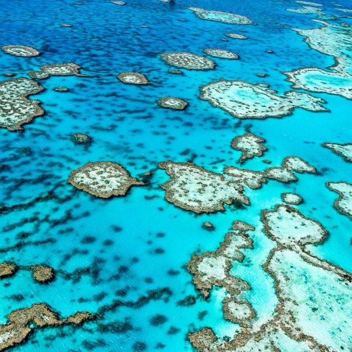 Blick von oben auf das blaue Wasser und das Riff des Great Barrier Reefs.