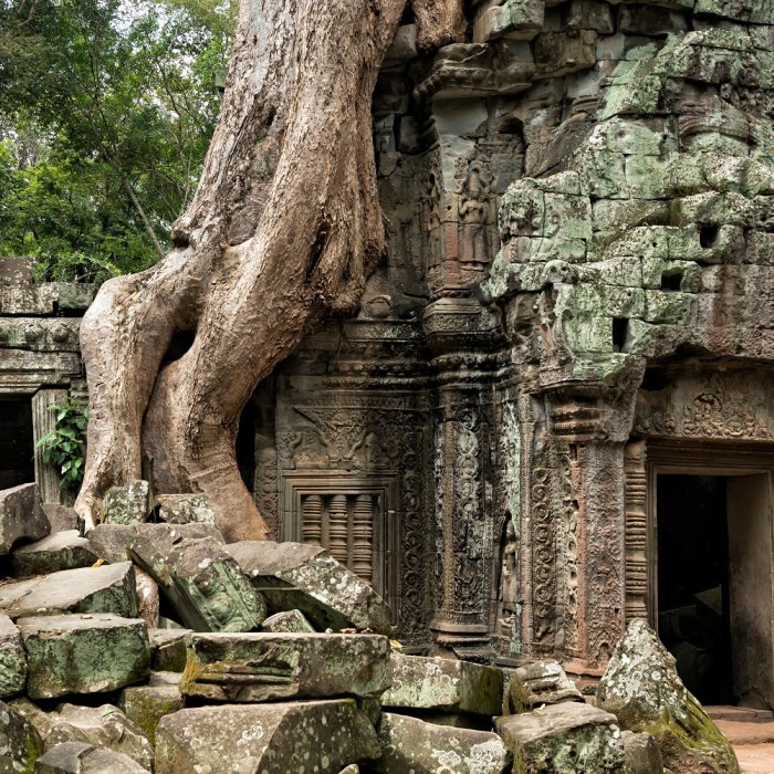 Überwucherter Tempel von nahem