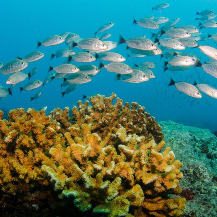 Die bunten Korallenriffe und ihre Bewohner im Cabo Pulmo Nationalpark