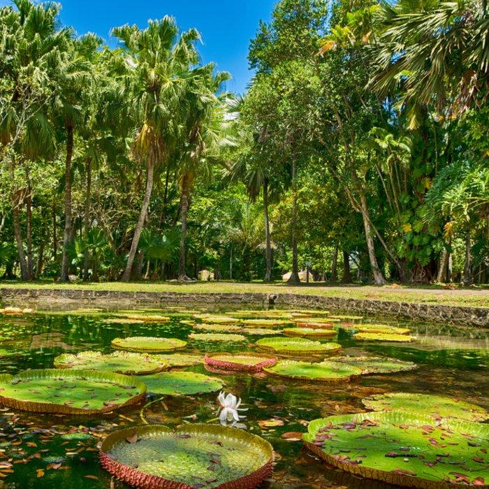 Der Riesenseerosen-Teich in der Mitte des Parks