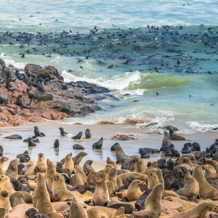 Eine Robbenkolonien an der Skelettküste in Namibia