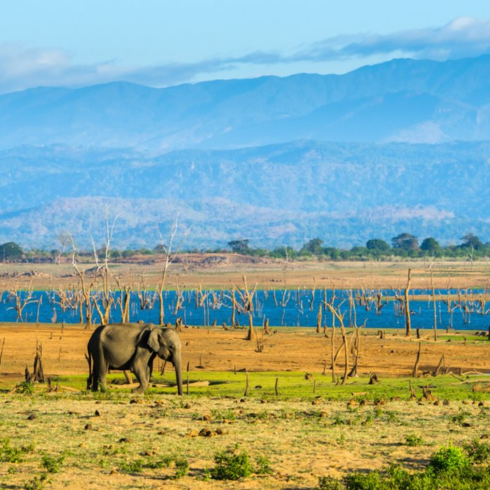 LK.Udawalawe National Park Elefant