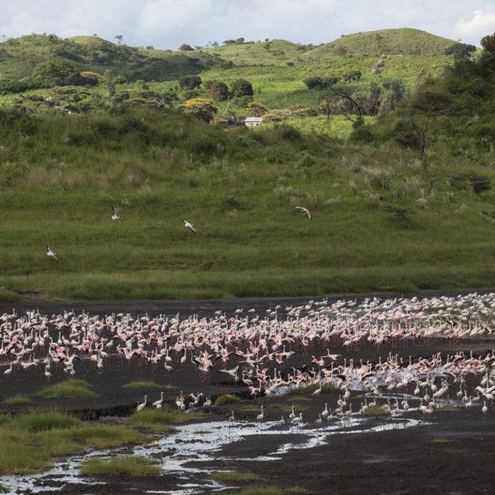 Flamingos versammelt an einem See im Arusha-Nationalpark in Tansania