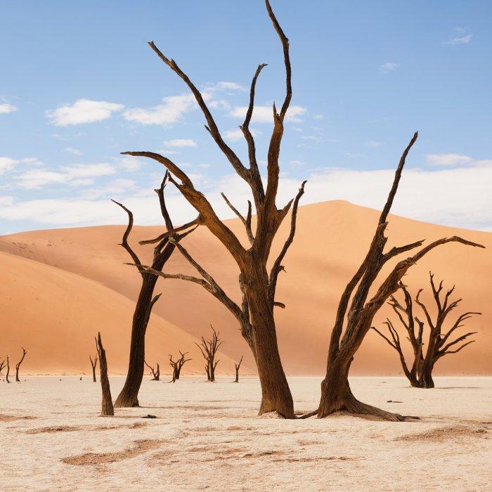 NA.Deadvlei Vetrocknete, abgestorbenen Akazienbäume in der Wüstenlandschaft Deadvlei