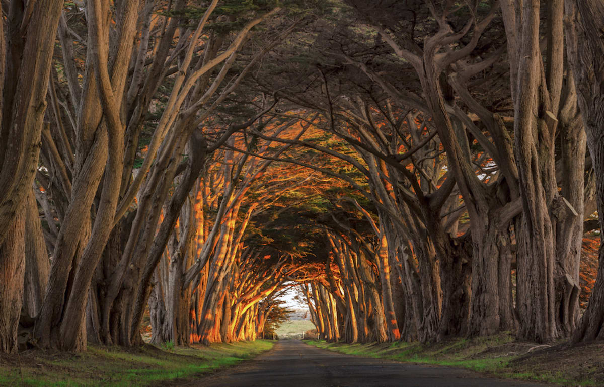 cypress-tree-tunnel-point-reyes