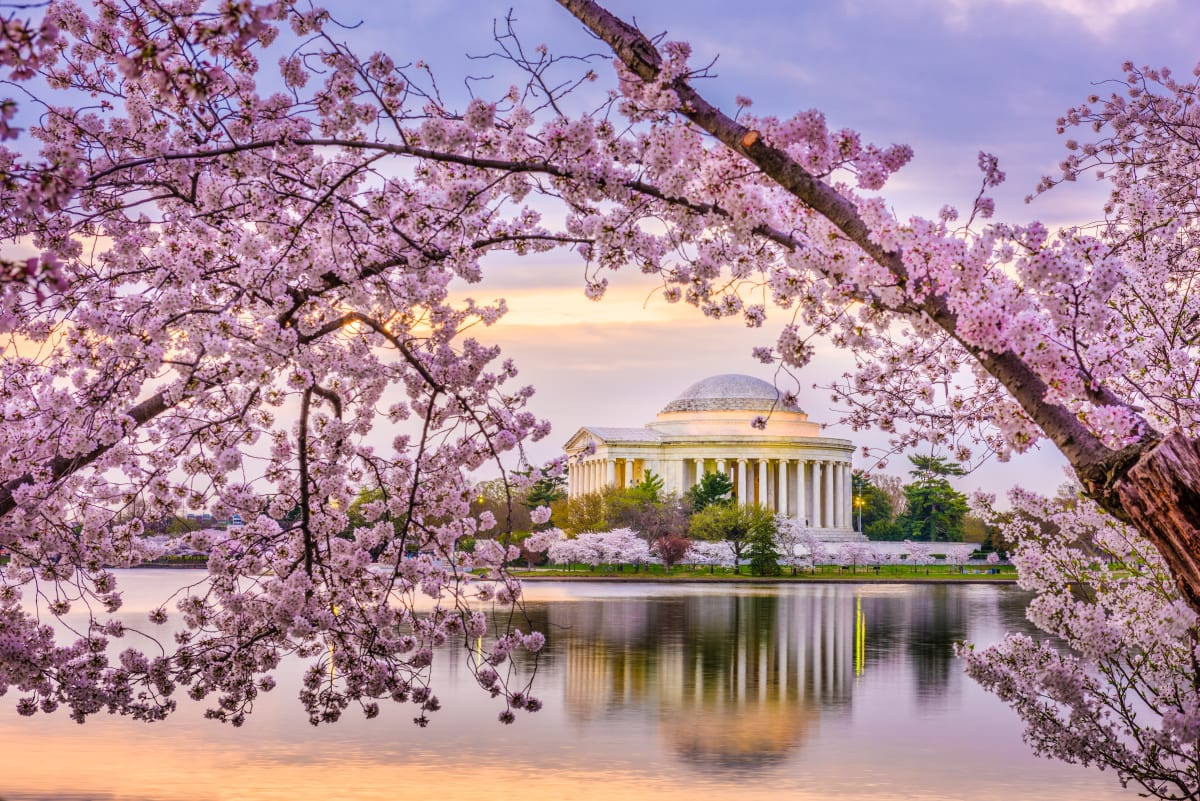 cherry blossoms over Jefferson Memorial and the Tidal Basin in Washington, DC