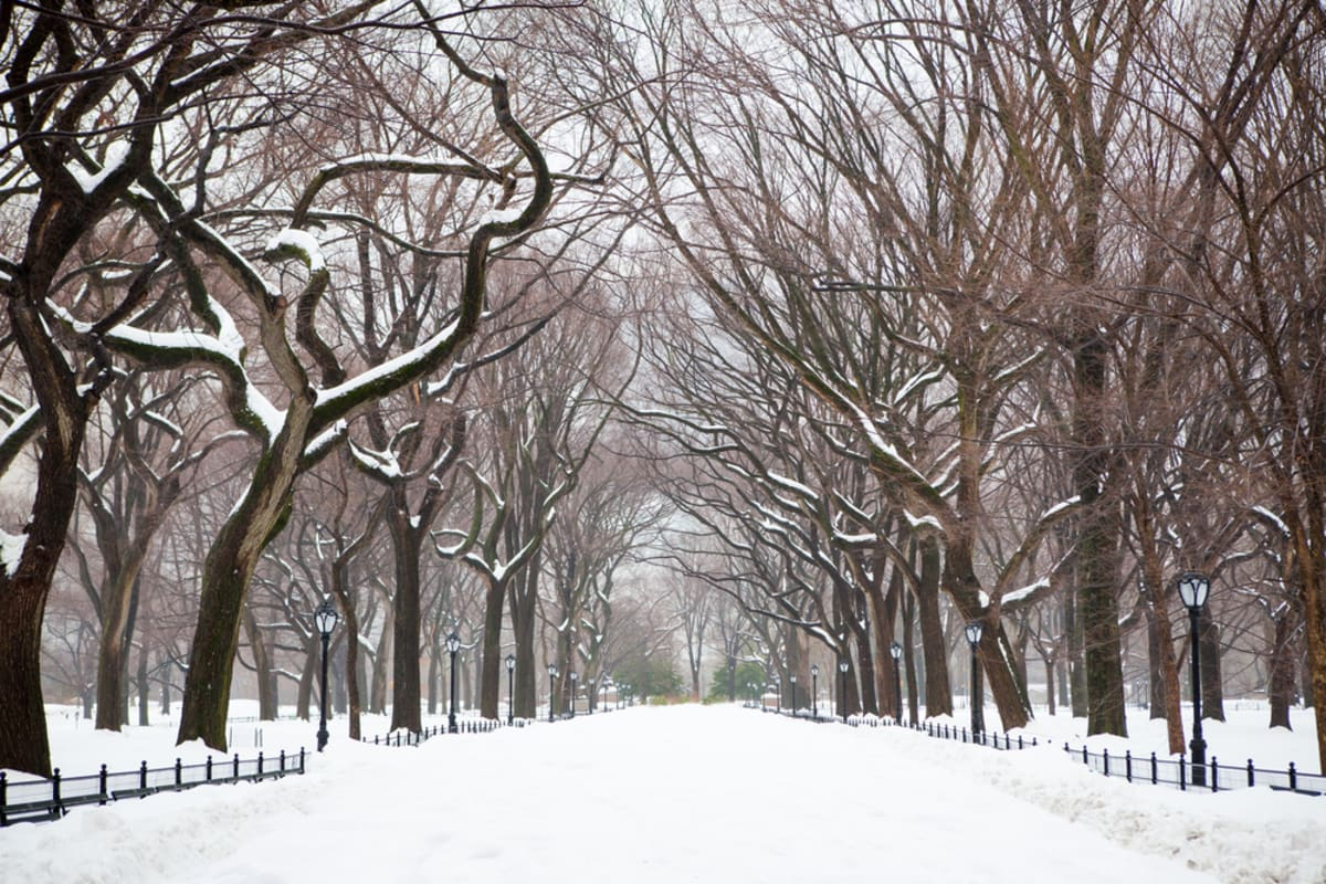 winter-central-park