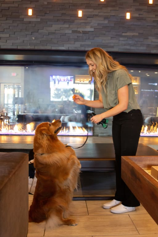 Highline Hotel Vail by Doubletree Mountain Lodge - Fireside pet friendly