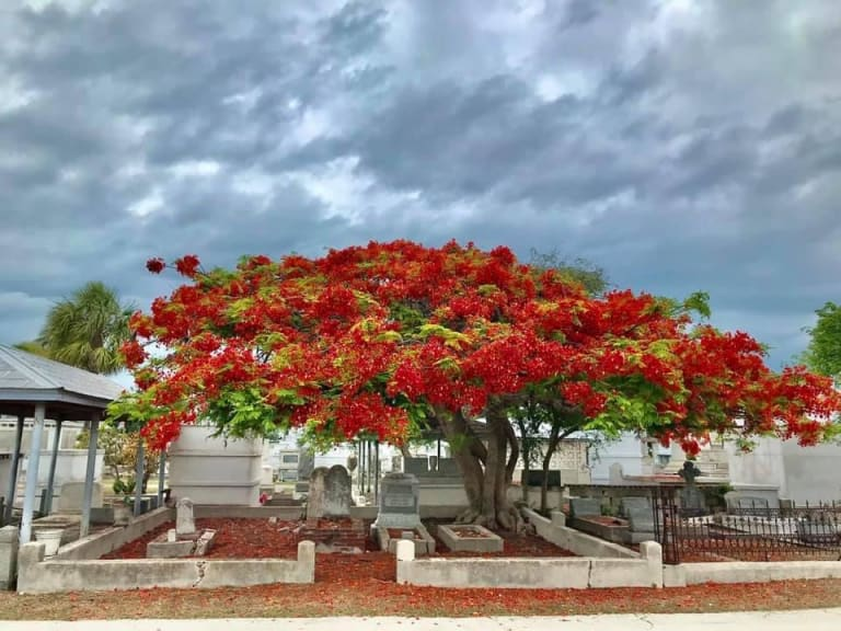 The Plot Thickens at The Key West Cemetery