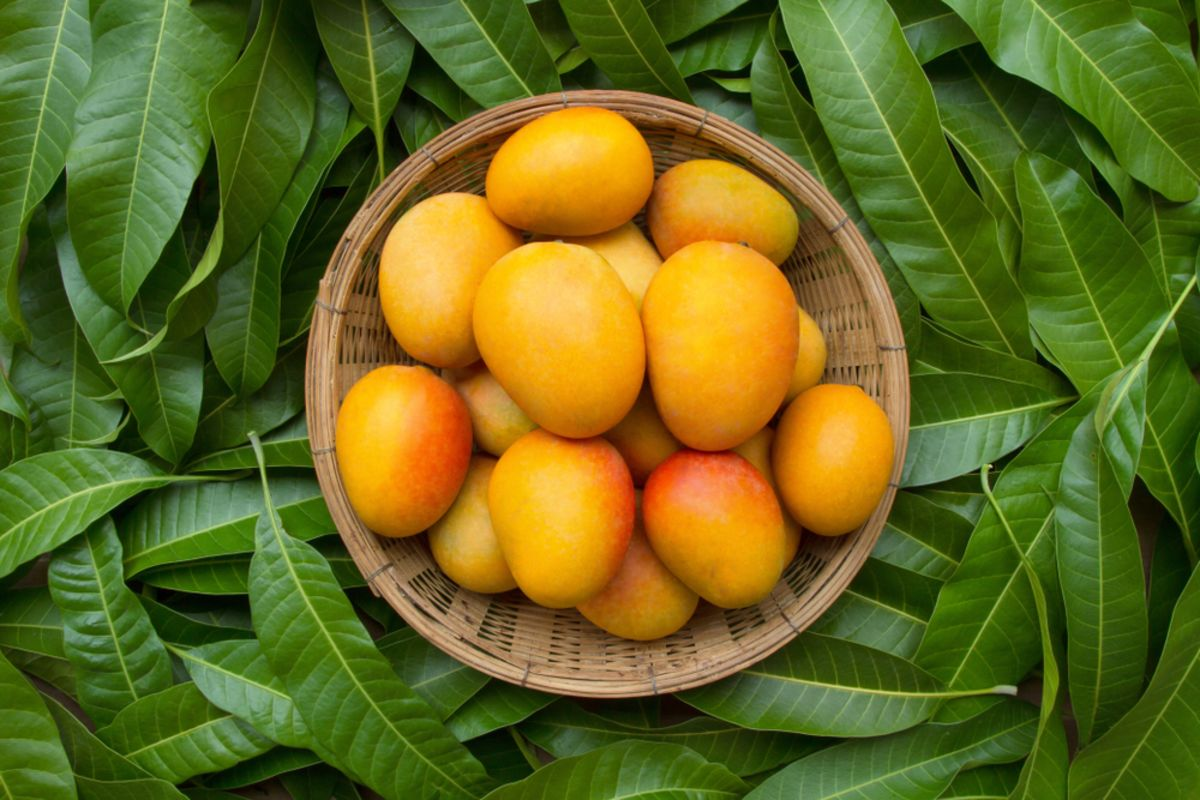 mango-fruit-hawaii