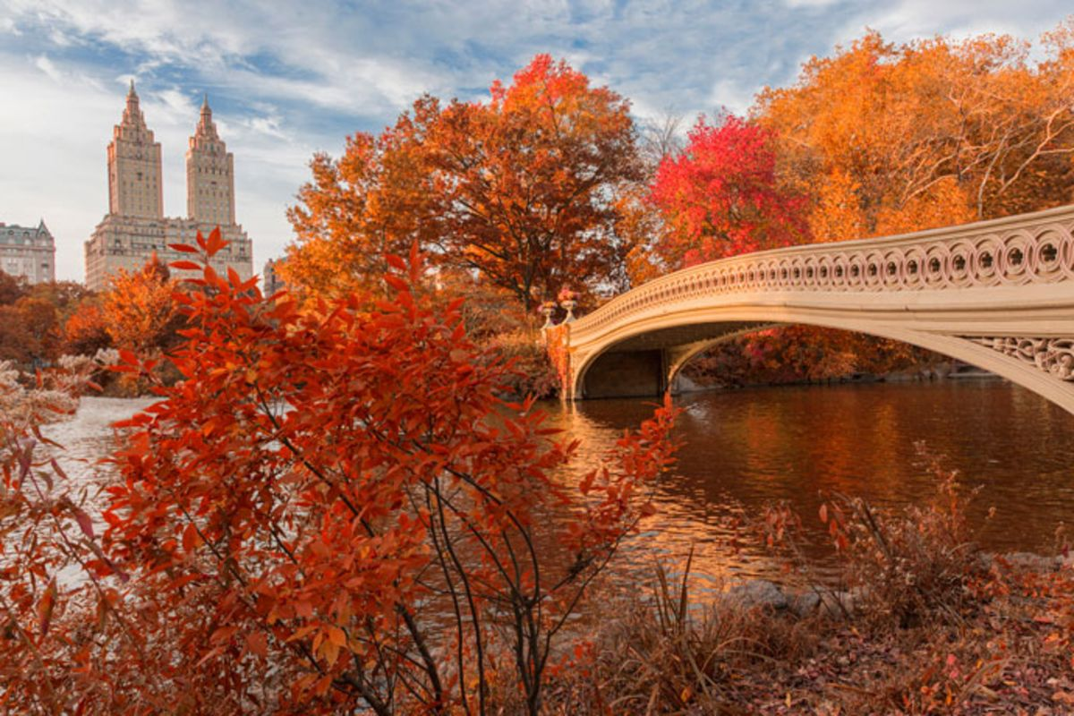 bow-bridge-in-central-park-in-fall-evening