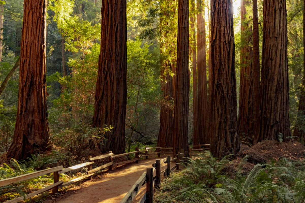 muir-woods-sf