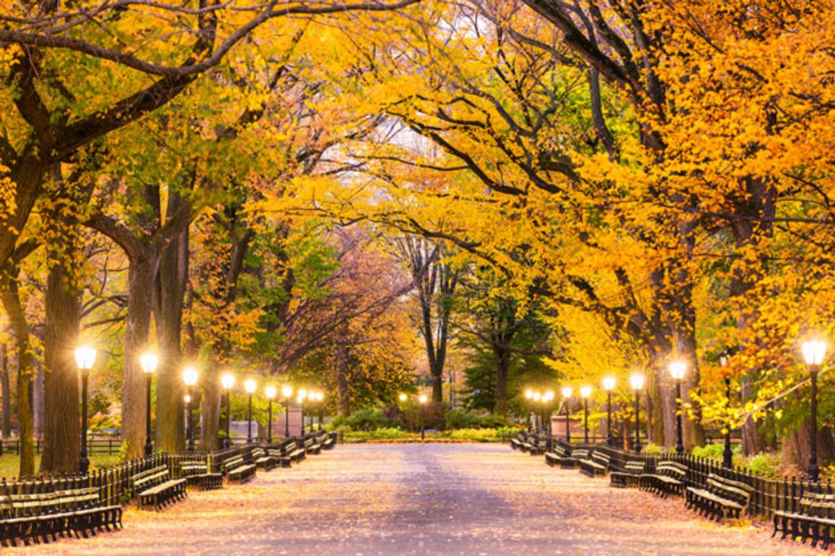 Tree lined Mall in Central Park in fall with lamps shining.