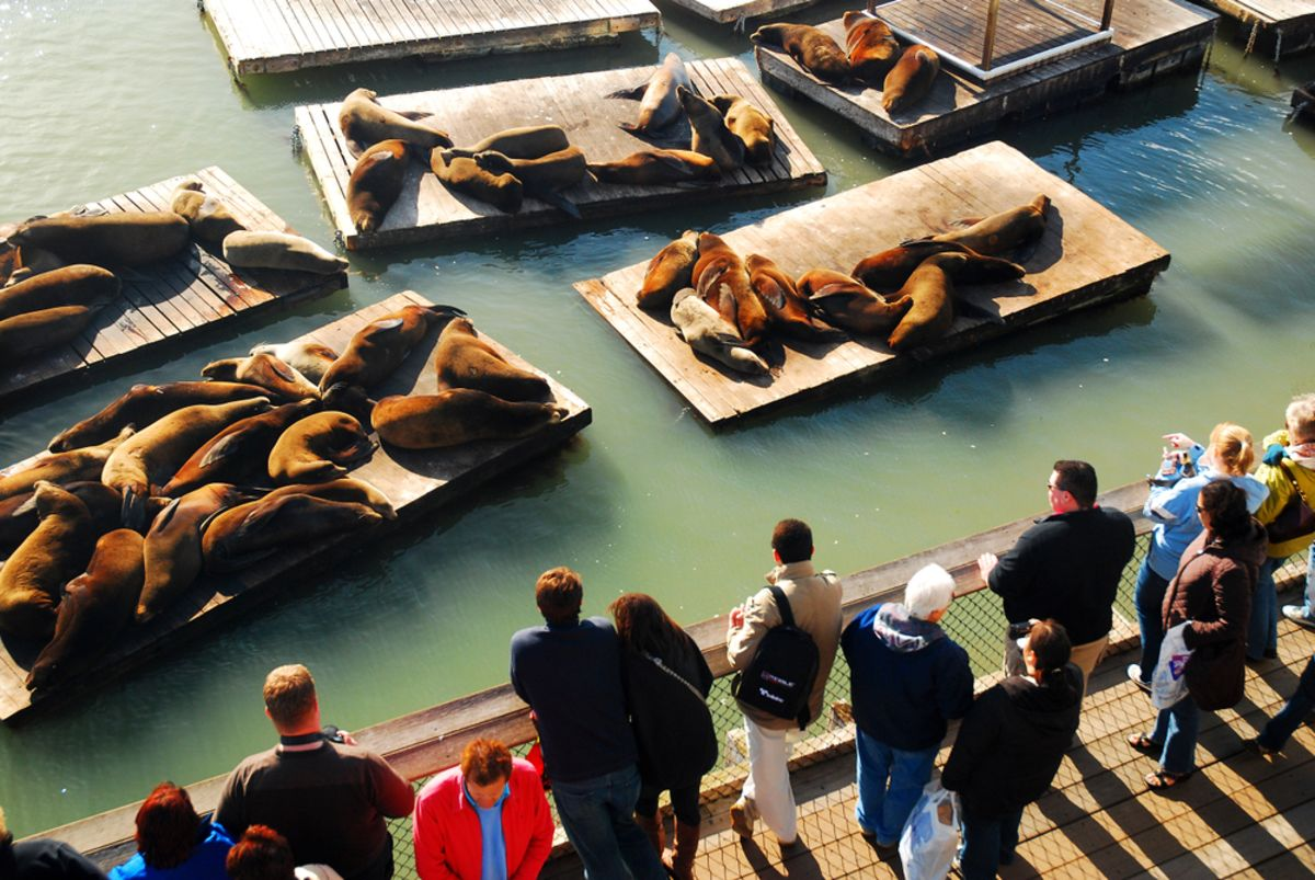 sea-lions-pier-39-sf-fishermans