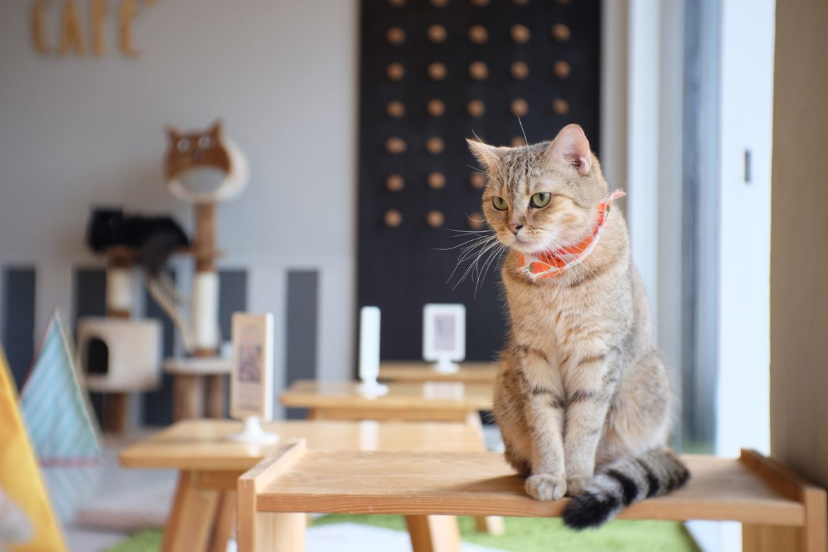cat-cafe-san-francisco