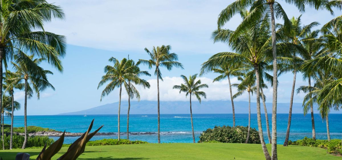 maui-beach-palm-trees