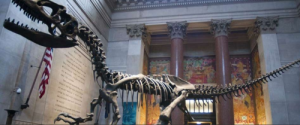 Best Museums to Visit in NYC This Winter
