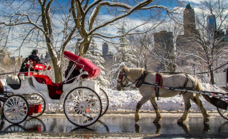 Photo of The Manhattan Club's Carriage horses in Central Park