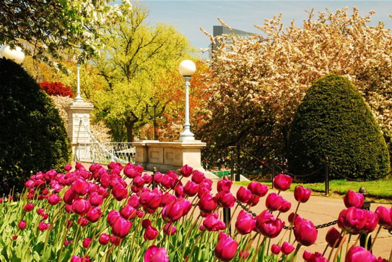 5 Ways to Welcome Spring in Boston