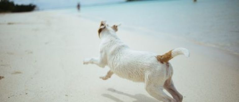 5 Pet-Friendly Things to Do in Key West