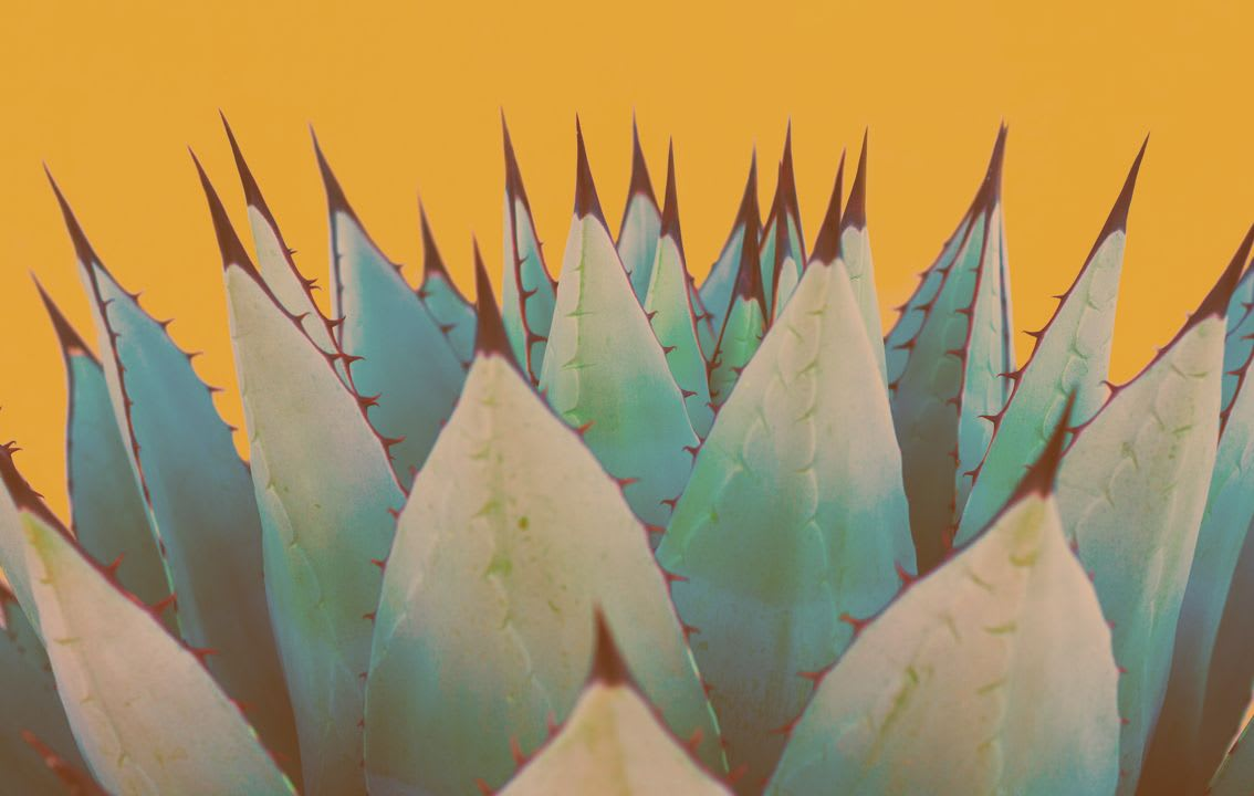 cactus-against-orange-wall