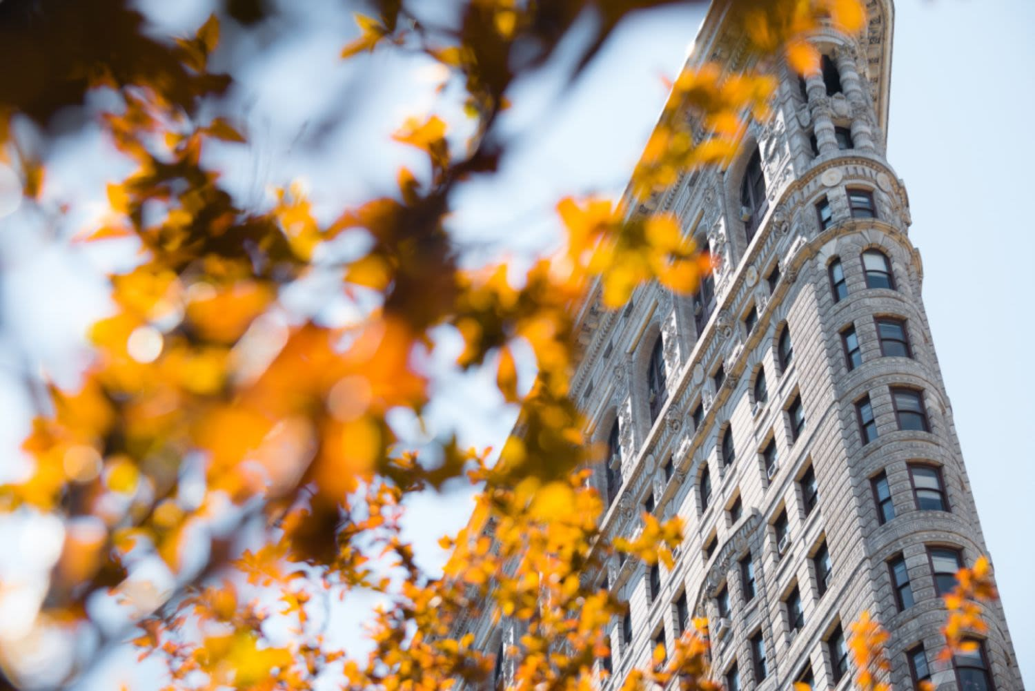 Where to See Fall Foliage in the City