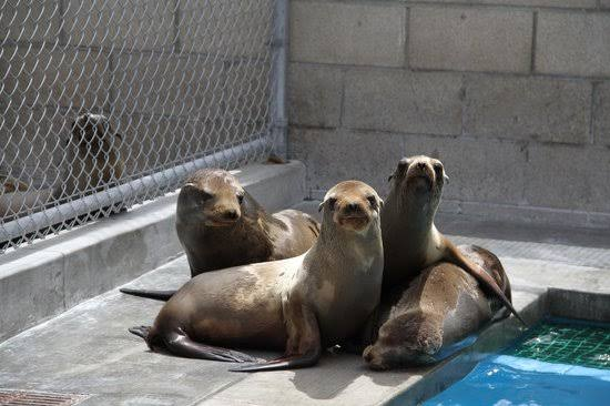 Marine Mammal Center