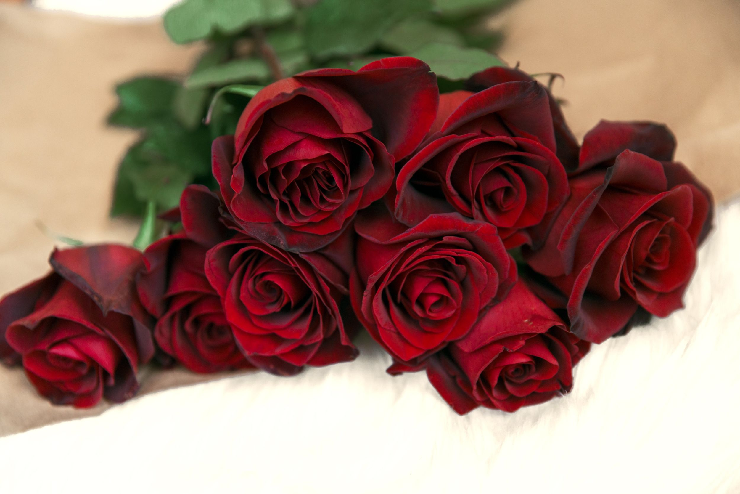 red-rose-bouquet-on-table