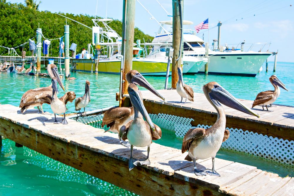 Save Your Appetite for the Florida Keys Seafood Festival