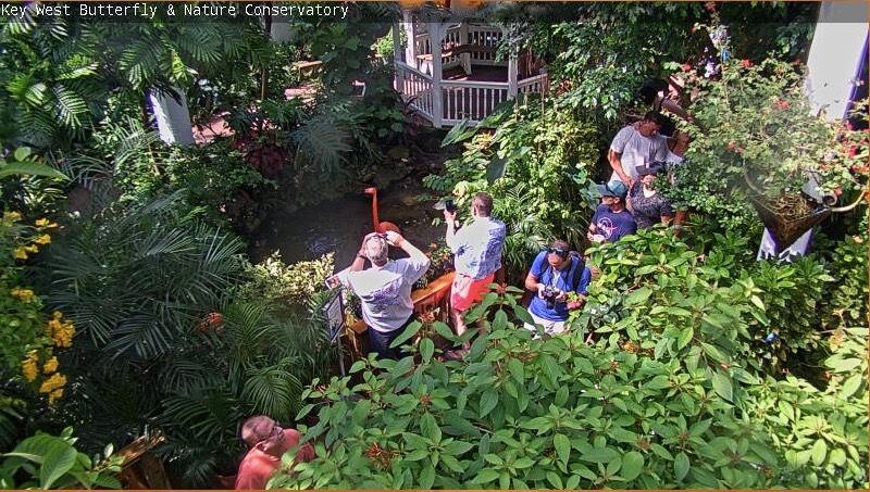 The Best Livestream Web Cams of Key West