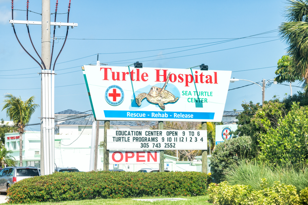 A Trip to the Turtle Hospital in the FL Keys Will Give You All the Feels