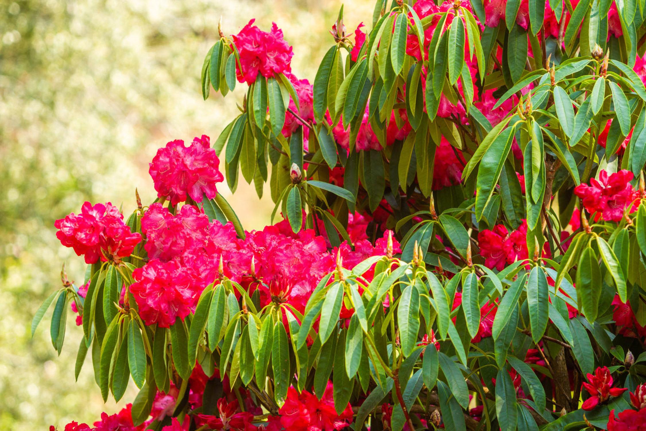 This Week's Floral Display