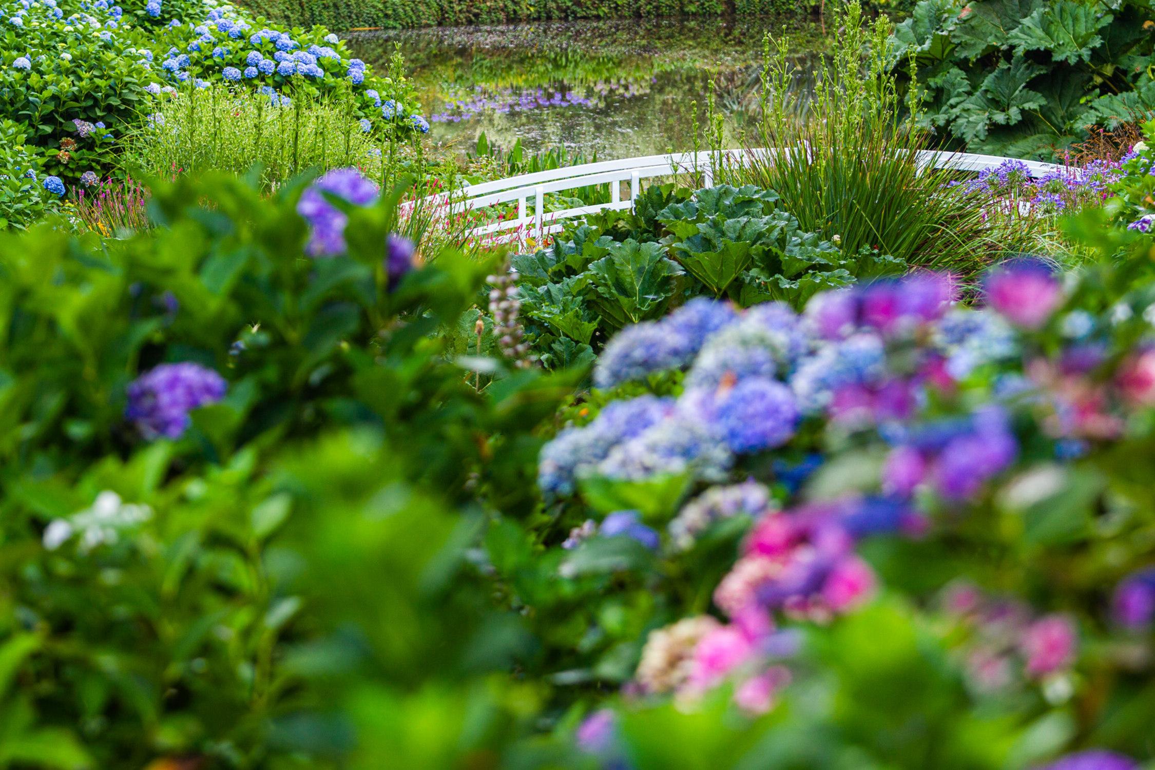 Hydrangea Season