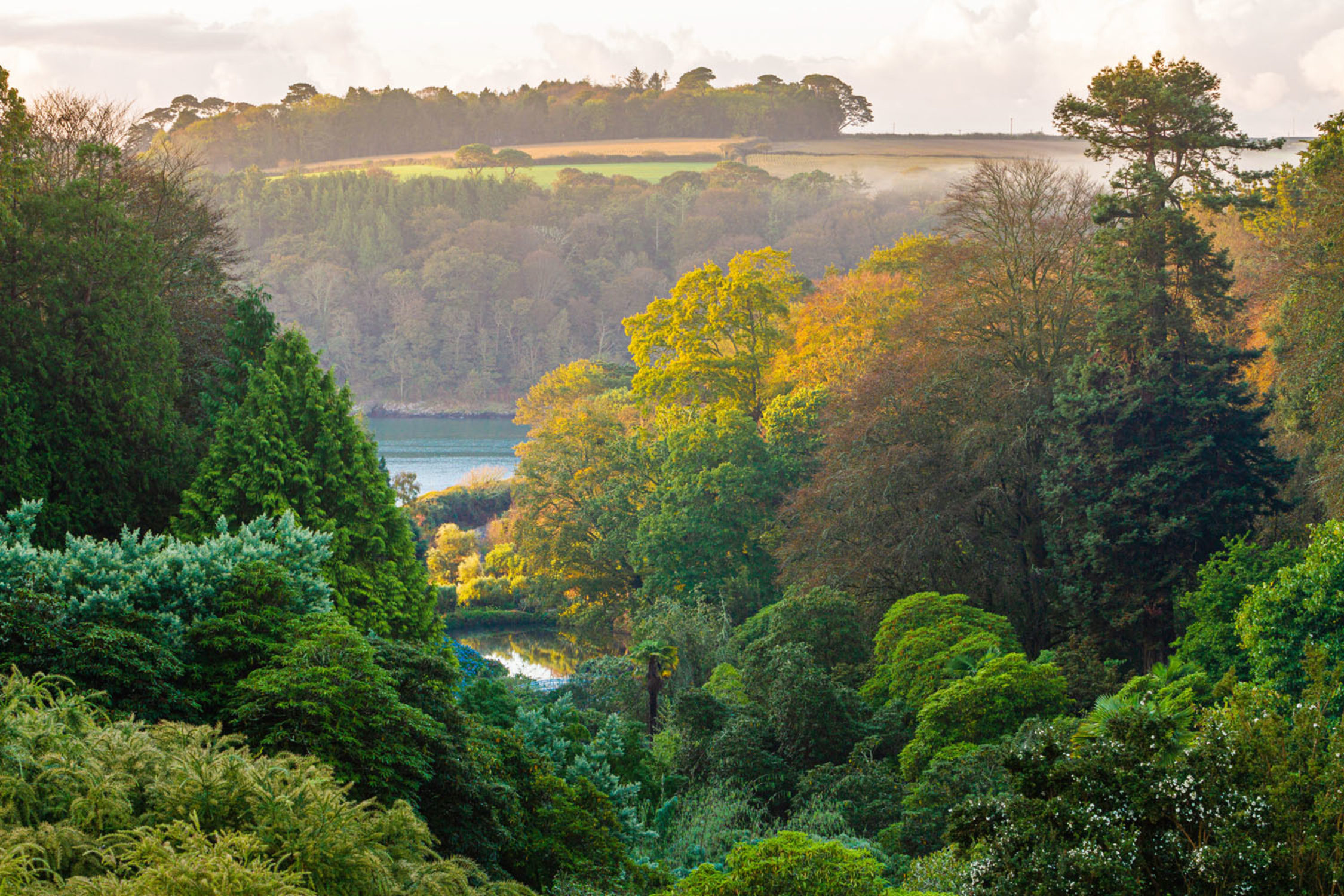 Autumn Colour At Trebah