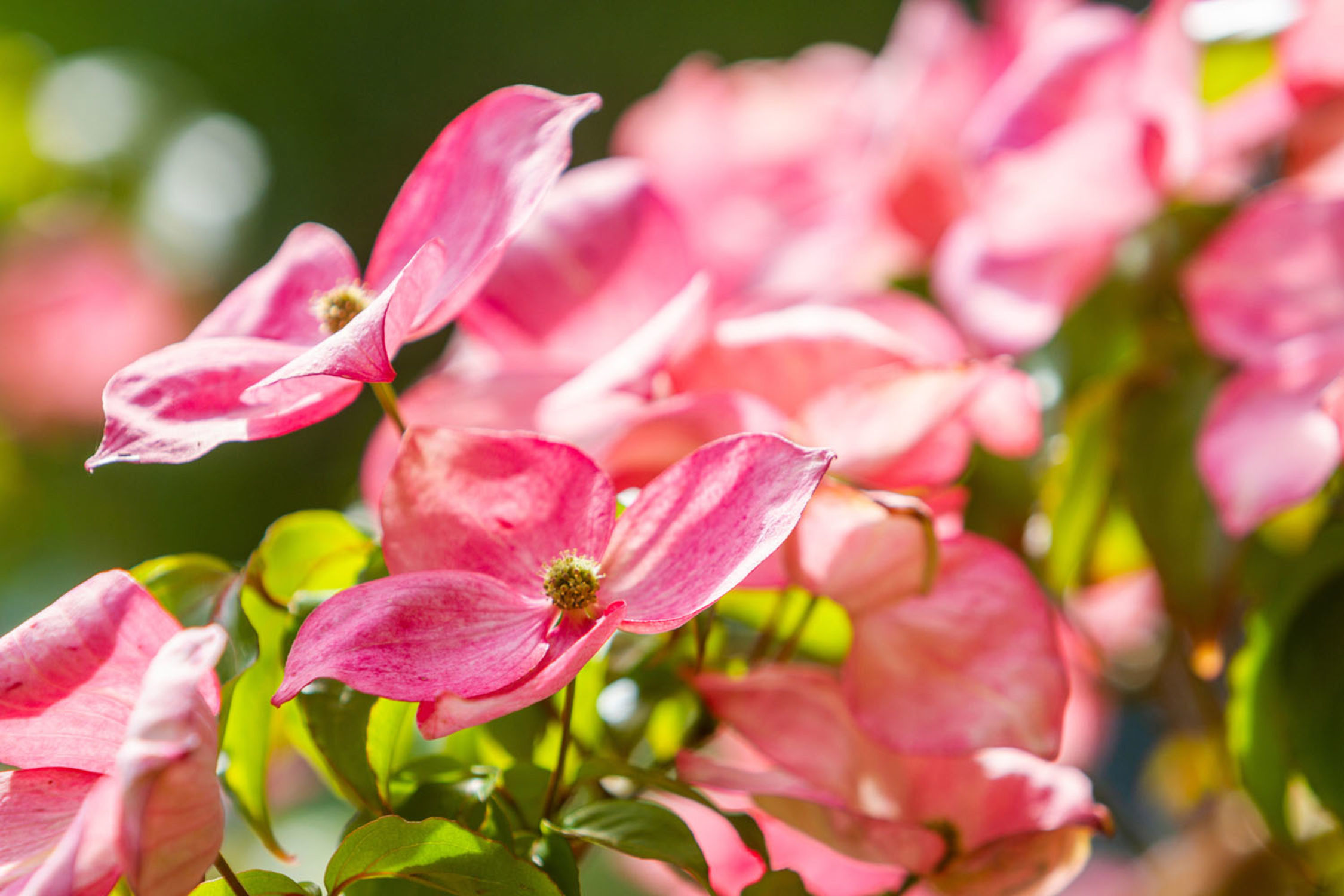 Plants To Look Out For In July