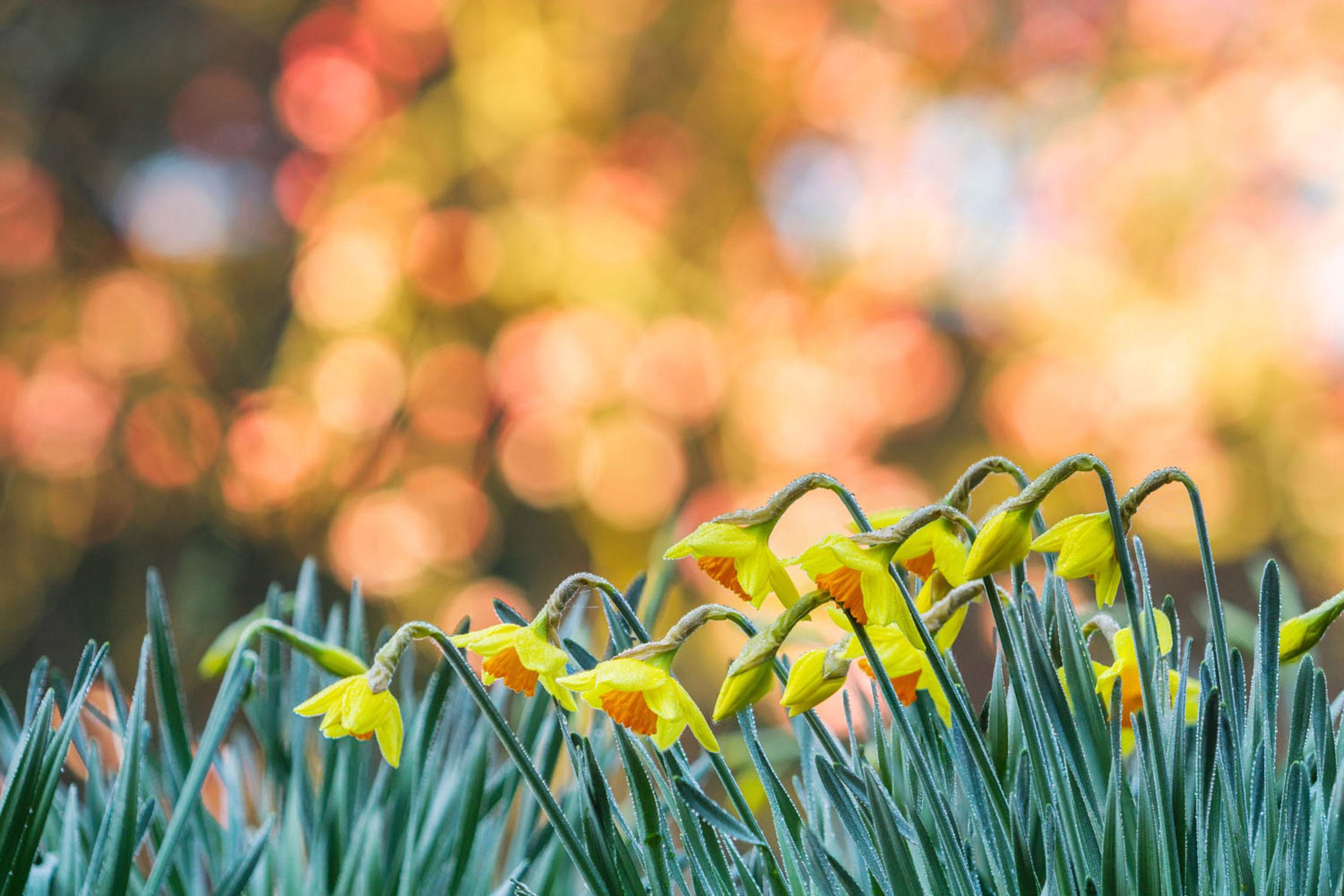 Cornwall's Spring Story Begins...