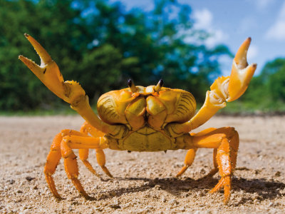 Crazy Crab Visits Trebah This Summer