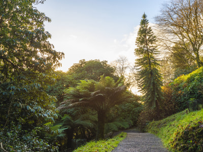 The Wollemi Pine: A Living Fossil