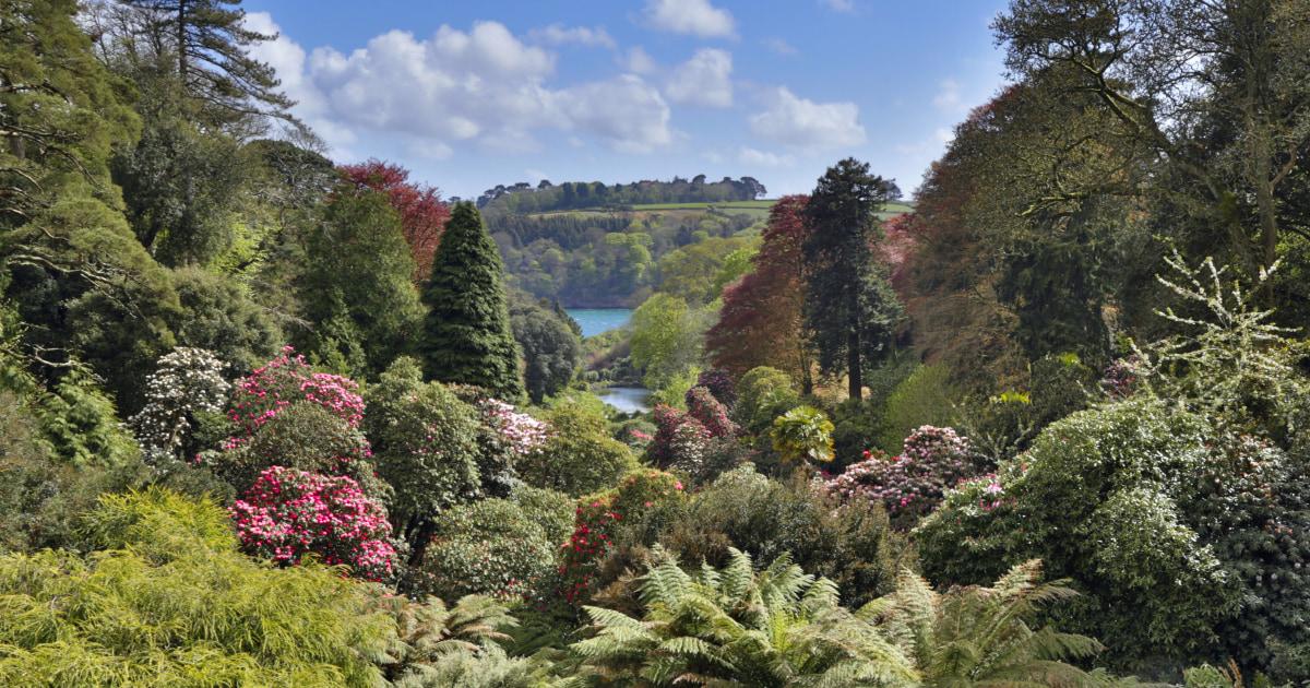Welcome to Trebah | Trebah Garden Cornwall