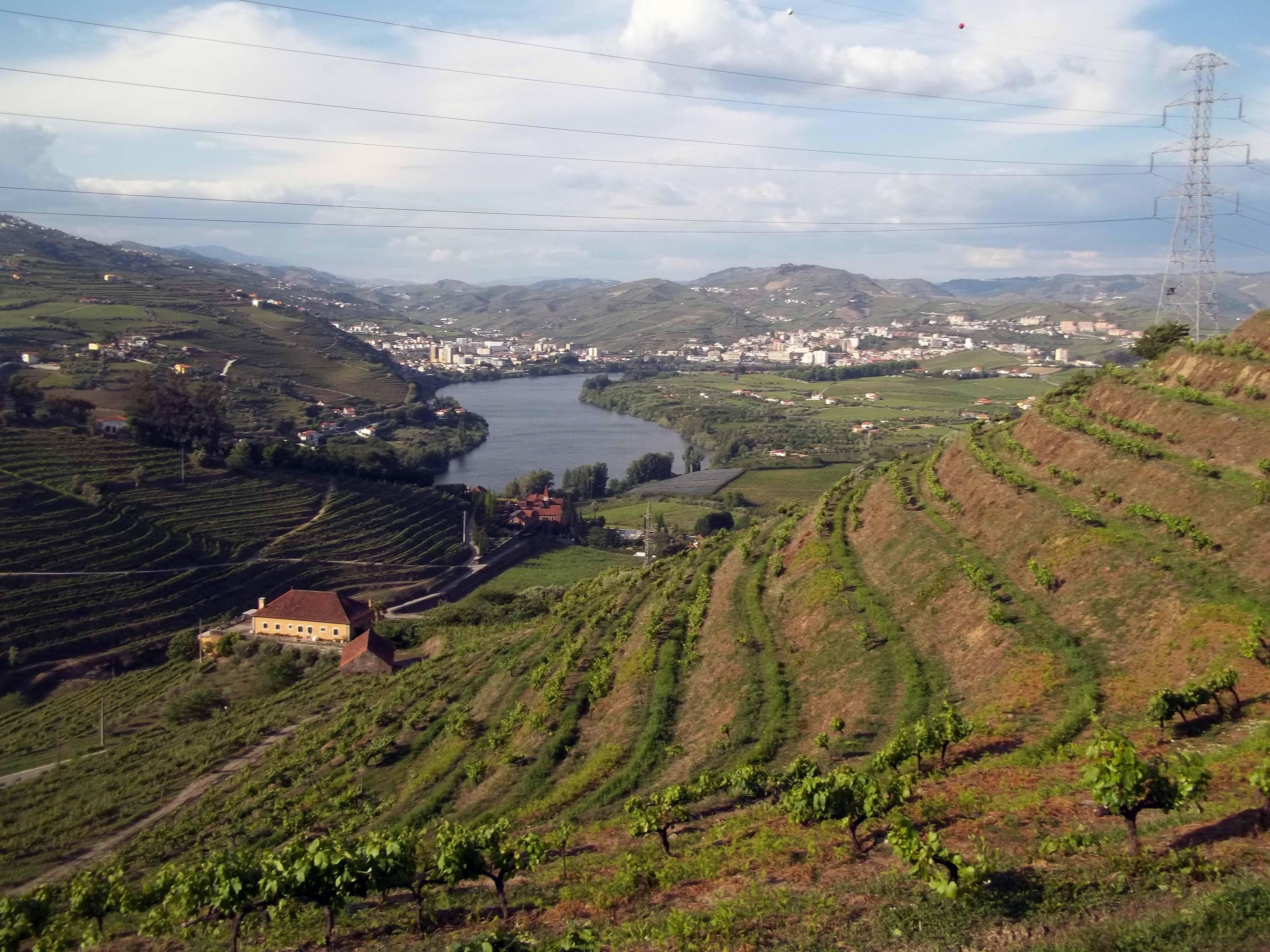 Trilho do Vinho Porto