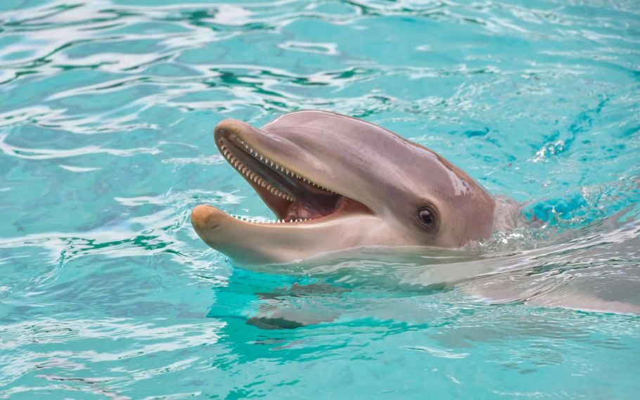 dolphin in nepal